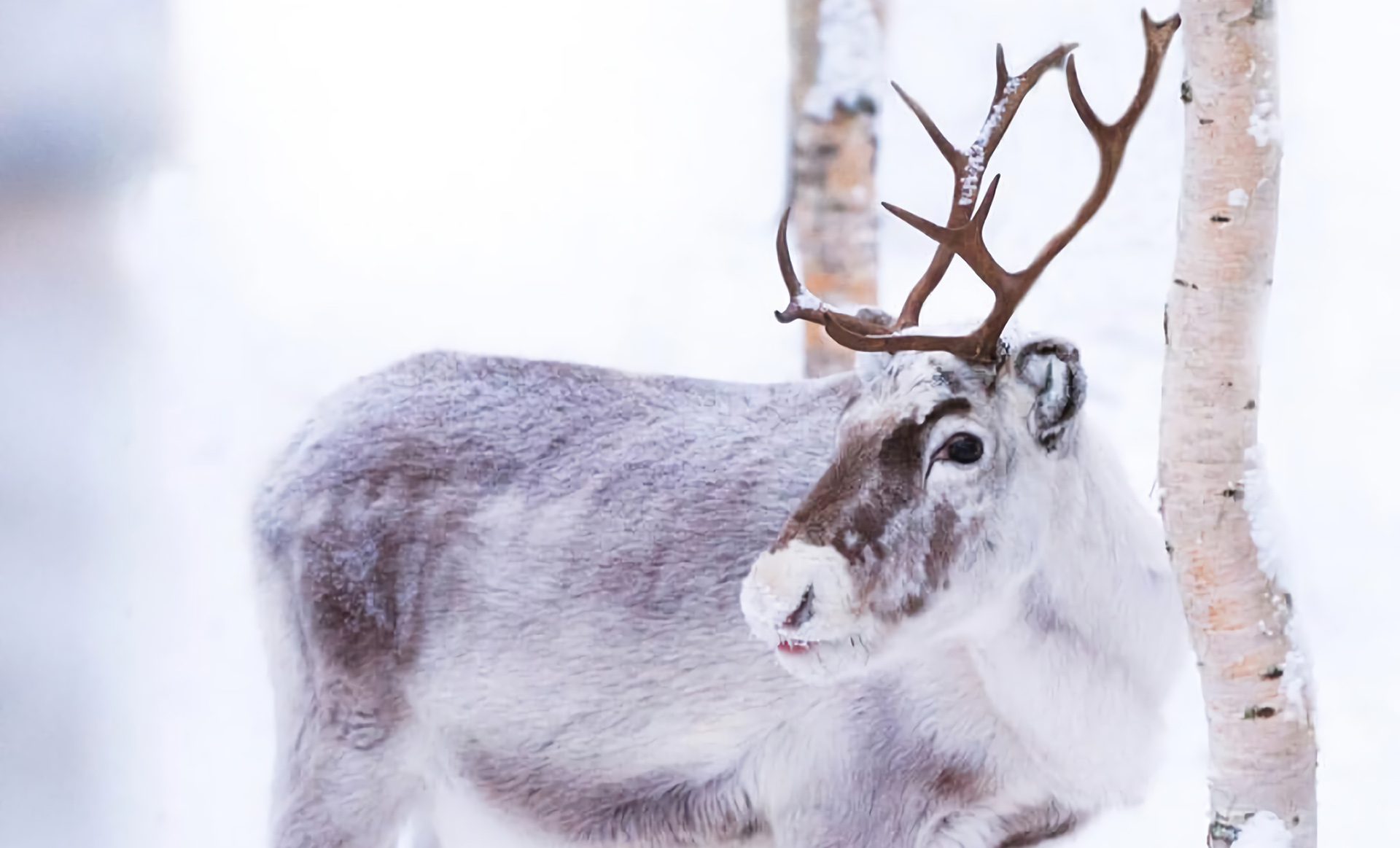 Walking in a Winter Wonderland…